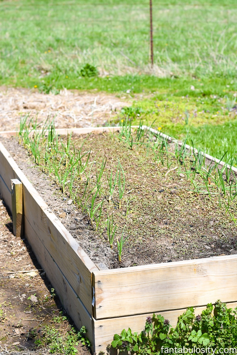 Raised garden bed - Greenhouse gardening ideas using some recycled items and other little tricks