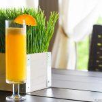 Mimosas for Daze…