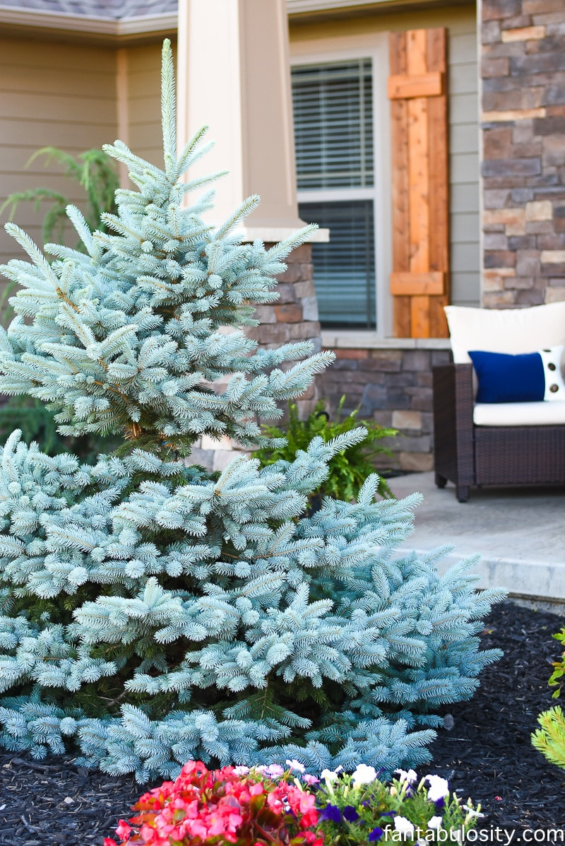 Front Yard Tree Landscaping